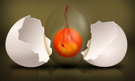 Rozwój embrionalny kury