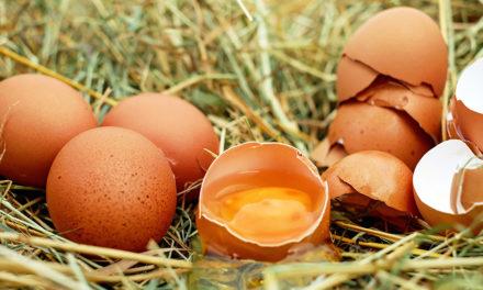 Niezwykłe kurze jajo
