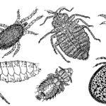 Choroby okresu wychowu kur – część XV choroby inwazyjne