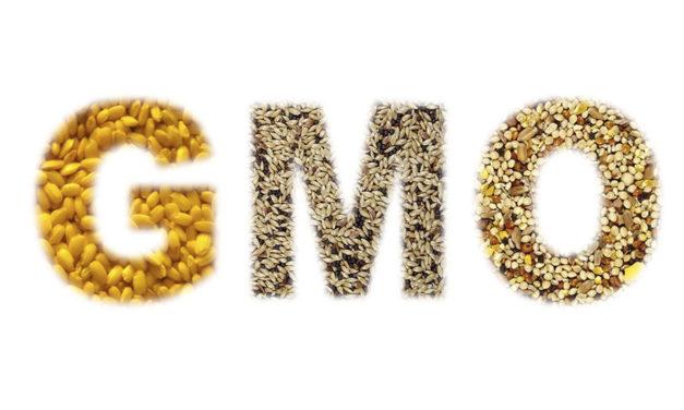 GMO wdiecie drobiu – skutki stosowania orazewentualne zamienniki