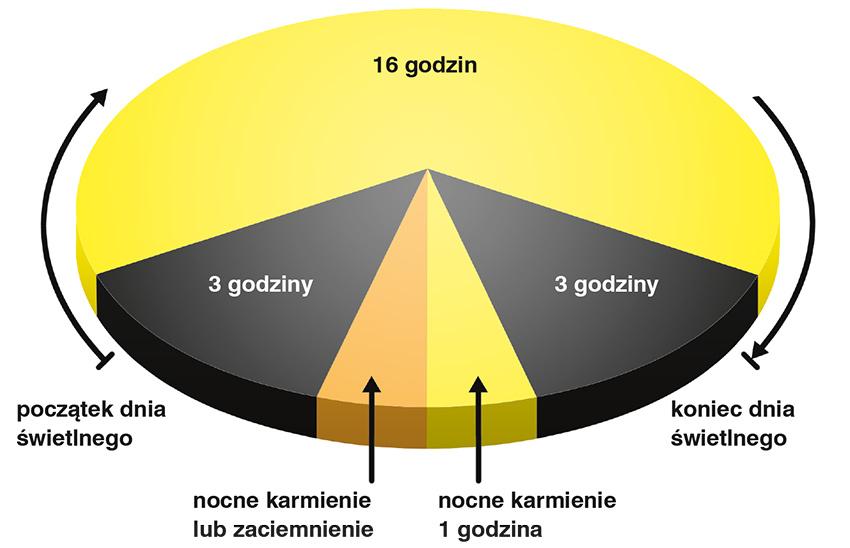 Rysunek 2. Graficzny przykład alternatywnego programu świetlnego (broszura Hy-Line, 2014)