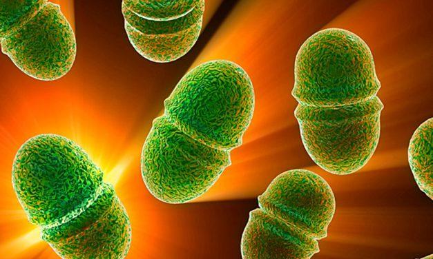 Enterokoki – wciąż aktualnym zagrożeniem zdrowotnym wprodukcji drobiarskiej
