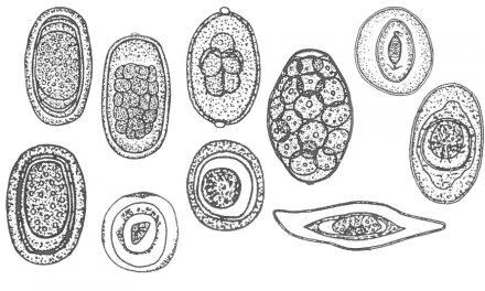 Choroby okresu wychowu kur – część XVI choroby inwazyjne pasożyty wewnętrzne