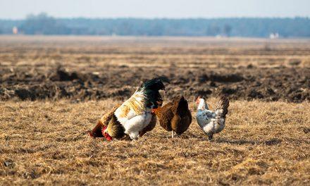 Oddziaływanie produkcji drobiarskiej naśrodowisko